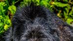 Marcus Westberg/Comedy Wildlife Photo Awards 2020