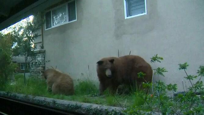 """Za sąsiadów mają niedźwiedzie. <br />""""To niesamowite, że coś tak dzikiego jest tak blisko"""""""