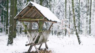 """Kontrolują dokarmianie zwierząt w lasach. Pokrywa śnieżna """"utrudnia dostęp do żeru"""""""