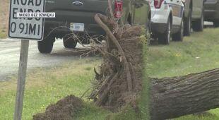 Powalone drzewa po przejściu tornada w Wirginii